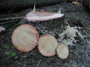 10mSite Felled Tree