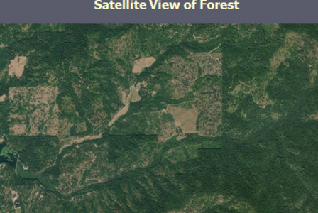 FBRI is the first to offer satellite-facilitated, stand-based forest inventory